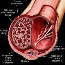 op-nyc-urologist-peyronies-disease-01